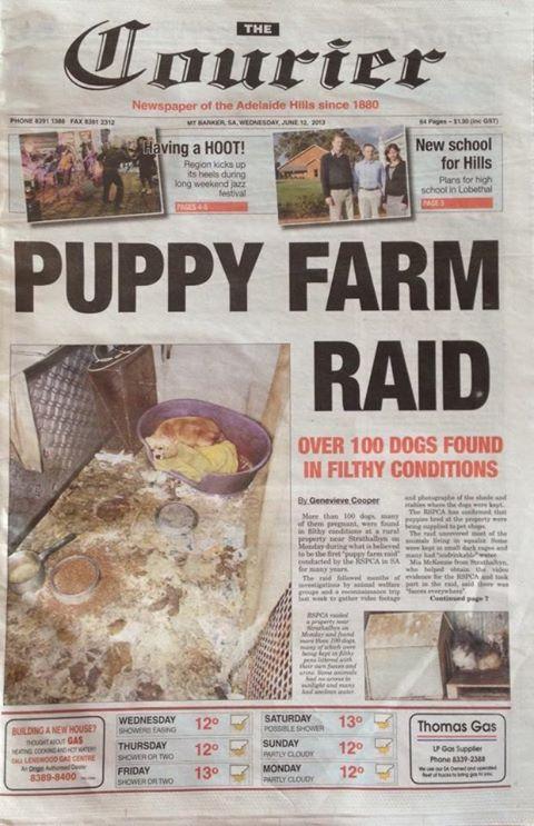 puppyfarm